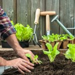 Stay Calm & Garden On: Growing Your Own Sustainable Garden
